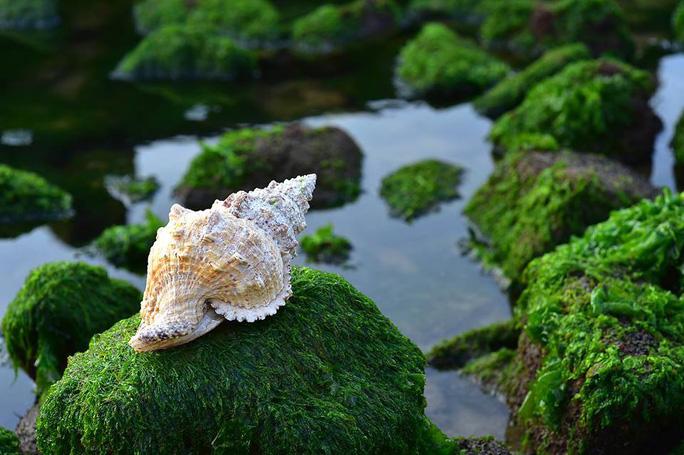 Ngắm bãi rêu xanh tuyệt đẹp hút khách ở Nha Trang - Ảnh 4.