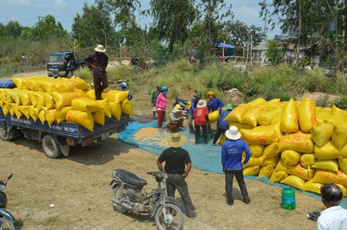 Tiêu thụ lúa gạo ở ĐBSCL: Hợp tác thay vì nhờ giải cứu! - Ảnh 1.