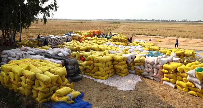 Tìm giải pháp giải cứu lúa gạo cho ĐBSCL - Ảnh 2.