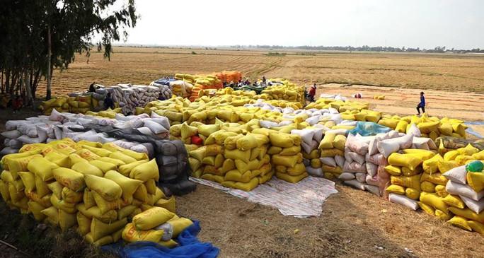 Ngân hàng cam kết bơm đủ vốn cho lúa gạo - Ảnh 1.