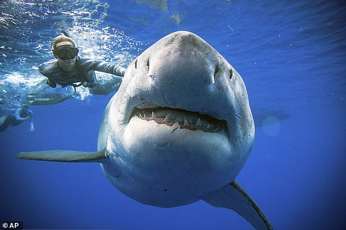 Úc phát triển đồ bơi… chống cá mập - Ảnh 1.