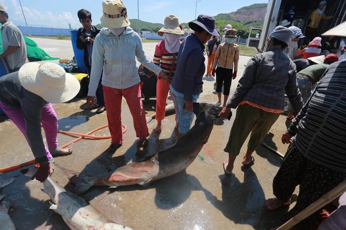Đầu năm nghe ngư phủ kể chuyện săn cá mập - Ảnh 3.
