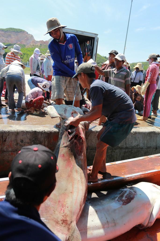 Đầu năm nghe ngư phủ kể chuyện săn cá mập - Ảnh 4.