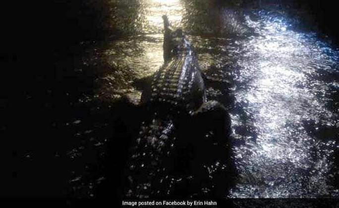 Úc: Lũ lớn, cá sấu và rắn bò lổm ngổm trên phố - Ảnh 1.