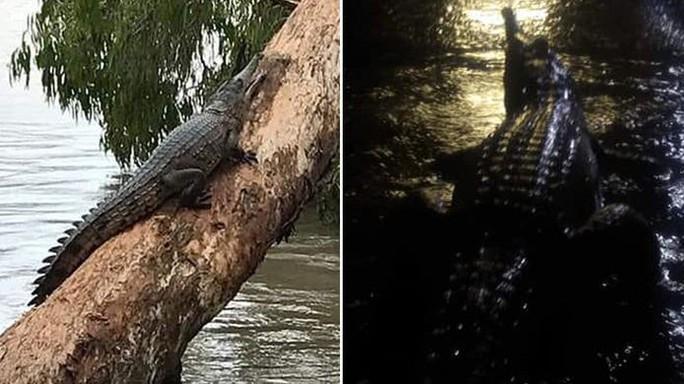 Úc: Lũ lớn, cá sấu và rắn bò lổm ngổm trên phố - Ảnh 2.
