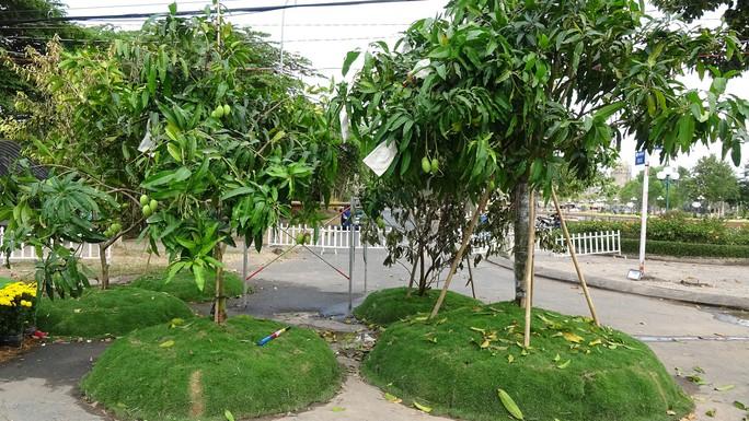 Lục bình, sen lên đường hoa Xuân ở thủ phủ đất Sen hồng Đồng Tháp - Ảnh 16.