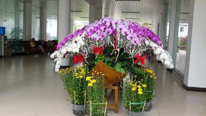Trụ sở UBND tỉnh Đồng Tháp thân thiện đón khách du Xuân - Ảnh 10.