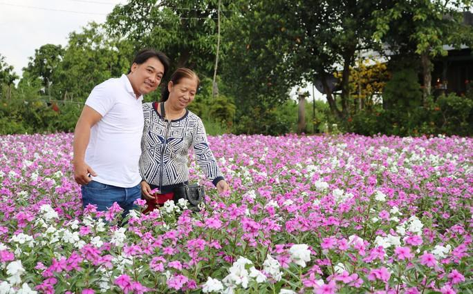 Bất ngờ với vẻ đẹp của hoa dừa cạn nở rực rỡ đón Xuân - Ảnh 4.