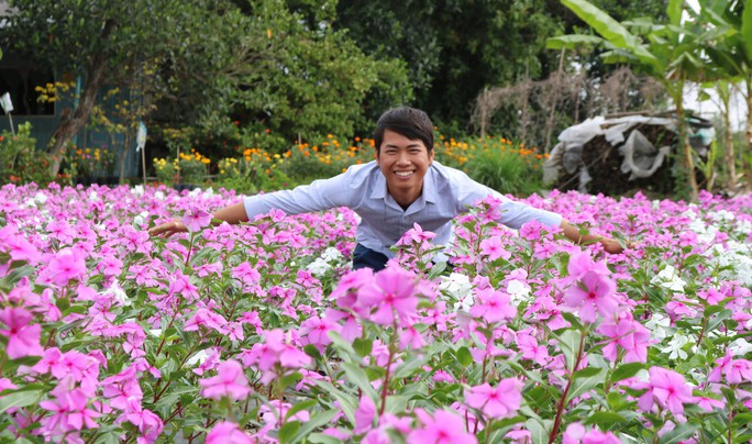 Bất ngờ với vẻ đẹp của hoa dừa cạn nở rực rỡ đón Xuân - Ảnh 5.