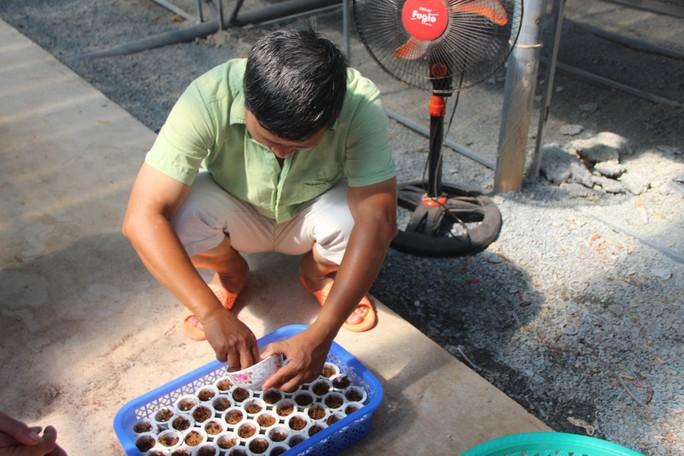 """Đầu năm, thăm trang trại rau sạch ở """"đảo ngọc"""" Phú Quốc  - Ảnh 1."""
