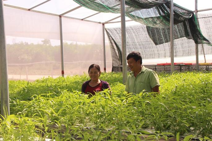 """Đầu năm, thăm trang trại rau sạch ở """"đảo ngọc"""" Phú Quốc  - Ảnh 2."""