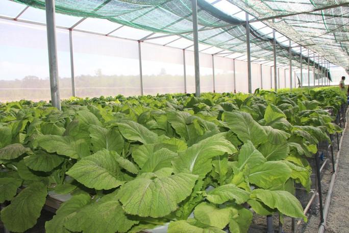 """Đầu năm, thăm trang trại rau sạch ở """"đảo ngọc"""" Phú Quốc  - Ảnh 4."""