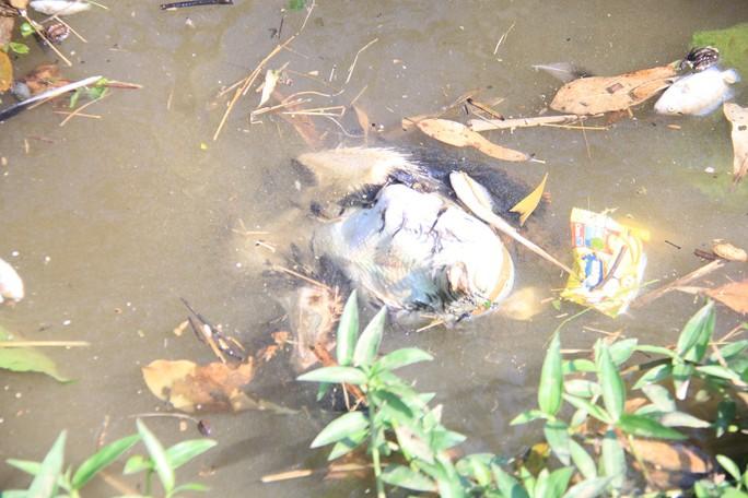 Bất ngờ nguyên nhân nước kênh nổi bọt, chảy đến đâu cá chết trắng - Ảnh 4.