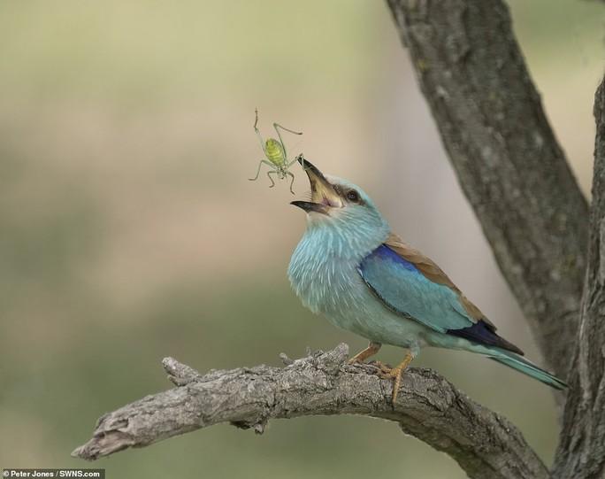 Động vật sống động tuyệt vời qua ống kính - Ảnh 10.