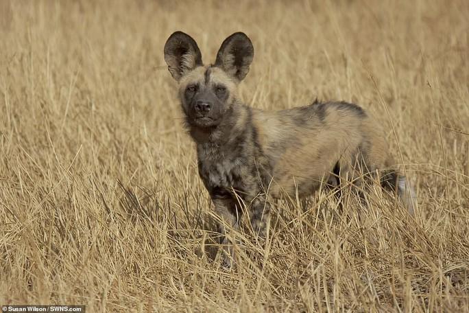 Động vật sống động tuyệt vời qua ống kính - Ảnh 9.