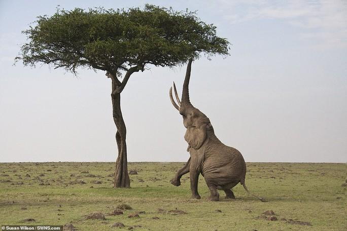Động vật sống động tuyệt vời qua ống kính - Ảnh 6.