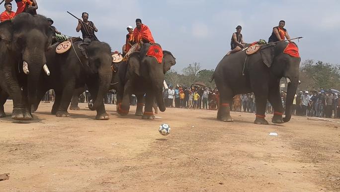 Hàng ngàn người đội nắng xem voi dự tiệc buffet, đá bóng, chạy đua - Ảnh 8.