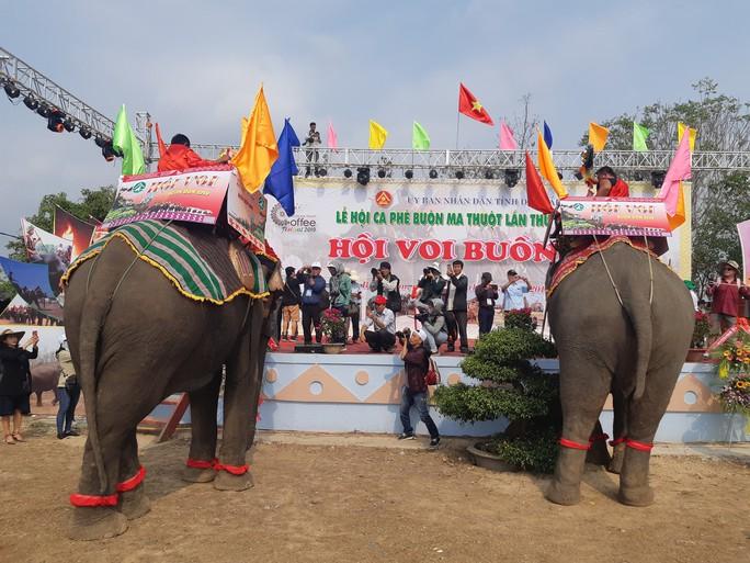Hàng ngàn người đội nắng xem voi dự tiệc buffet, đá bóng, chạy đua - Ảnh 1.