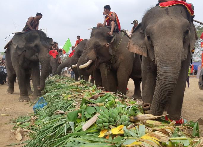 Hàng ngàn người đội nắng xem voi dự tiệc buffet, đá bóng, chạy đua - Ảnh 4.