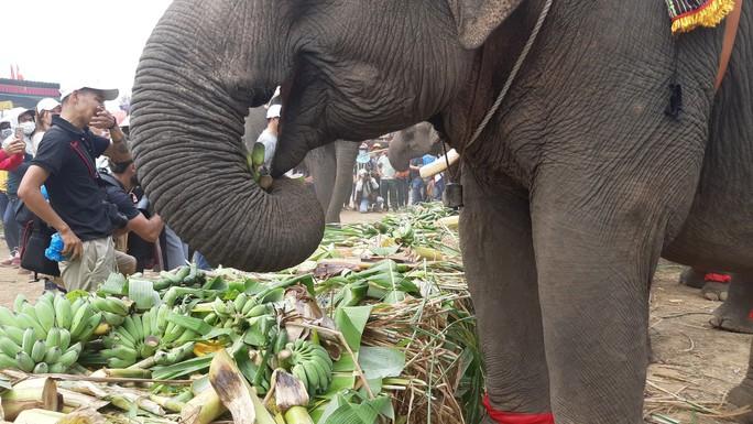 Hàng ngàn người đội nắng xem voi dự tiệc buffet, đá bóng, chạy đua - Ảnh 5.