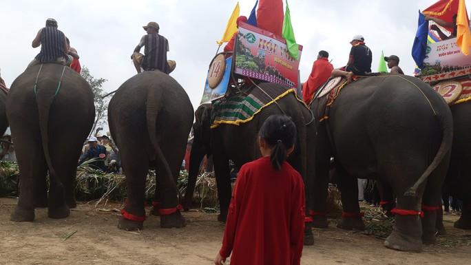 Hàng ngàn người đội nắng xem voi dự tiệc buffet, đá bóng, chạy đua - Ảnh 6.