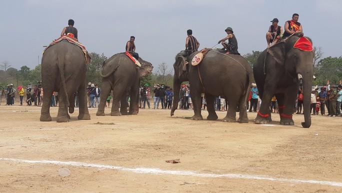 Hàng ngàn người đội nắng xem voi dự tiệc buffet, đá bóng, chạy đua - Ảnh 7.