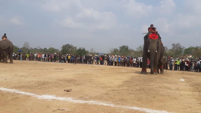 Hàng ngàn người đội nắng xem voi dự tiệc buffet, đá bóng, chạy đua - Ảnh 11.