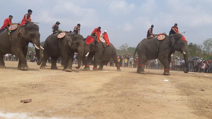 Hàng ngàn người đội nắng xem voi dự tiệc buffet, đá bóng, chạy đua - Ảnh 10.