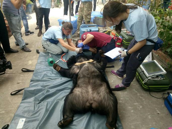 Giải thoát  2 chú gấu sau 15 năm nuôi nhốt tại Bình Dương - Ảnh 1.