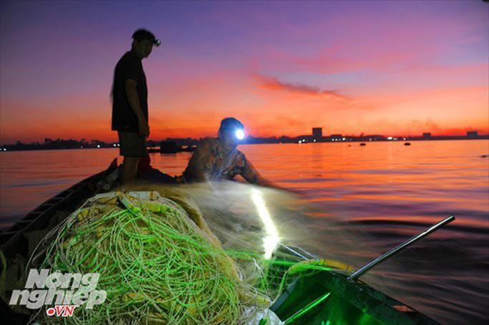 Sướng mắt theo ghe miền Tây săn tôm càng, cá bông lau - Ảnh 6.
