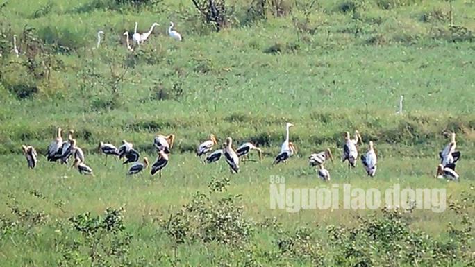 Gia đình Sếu đầu đỏ dìu dắt nhau về khu Ramsar thứ 2.000 của thế giới - Ảnh 3.
