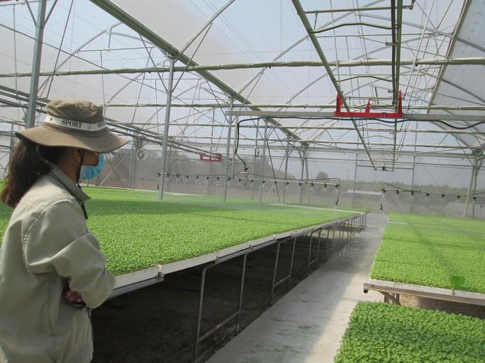 Sức hút của nông nghiệp Việt - Ảnh 1.
