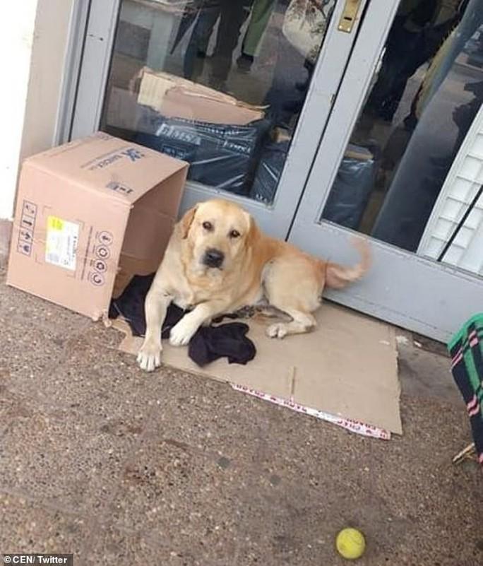 Chó trung thành chờ chủ đã chết hơn 1 tuần trước bệnh viện - Ảnh 1.