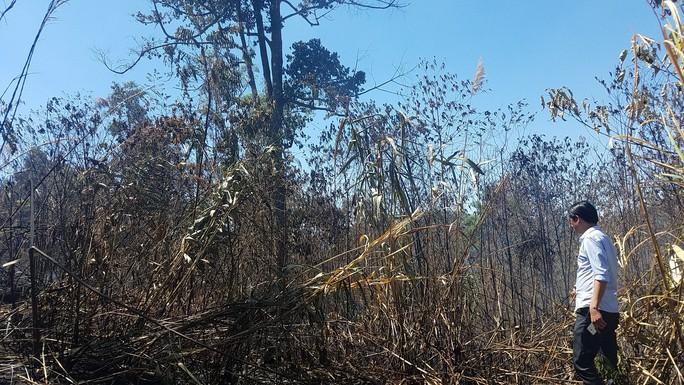 Đốt nhằm chống cháy nhưng lại để cháy luôn 10 ha rừng, xong giấu nhẹm - Ảnh 1.