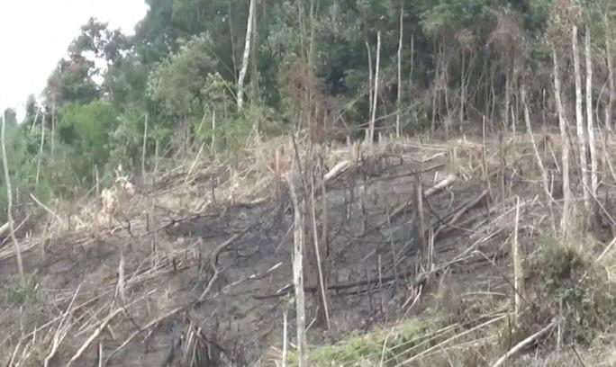 Phó Chủ tịch xã tham gia phá 2,5 ha rừng, công an vào cuộc - Ảnh 1.