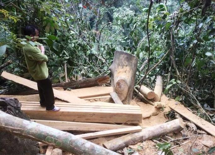 Cận cảnh phá rừng trong vùng lõi Khu bảo tồn thiên nhiên Ngọc Sơn - Ngổ Luông - Ảnh 9.