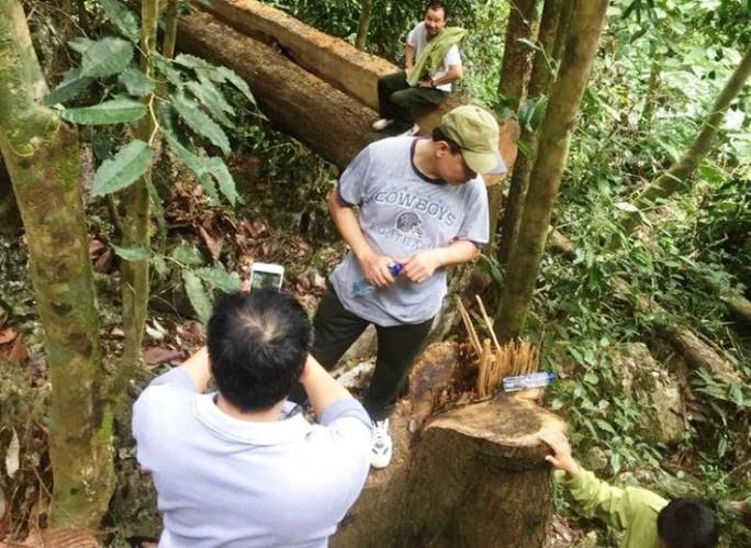 Cận cảnh phá rừng trong vùng lõi Khu bảo tồn thiên nhiên Ngọc Sơn - Ngổ Luông - Ảnh 5.