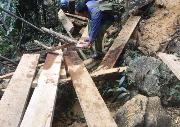 Cận cảnh phá rừng trong vùng lõi Khu bảo tồn thiên nhiên Ngọc Sơn - Ngổ Luông - Ảnh 7.