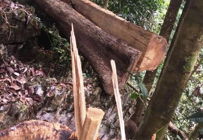 Cận cảnh phá rừng trong vùng lõi Khu bảo tồn thiên nhiên Ngọc Sơn - Ngổ Luông - Ảnh 3.
