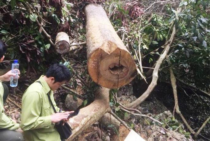 Cận cảnh phá rừng trong vùng lõi Khu bảo tồn thiên nhiên Ngọc Sơn - Ngổ Luông - Ảnh 10.