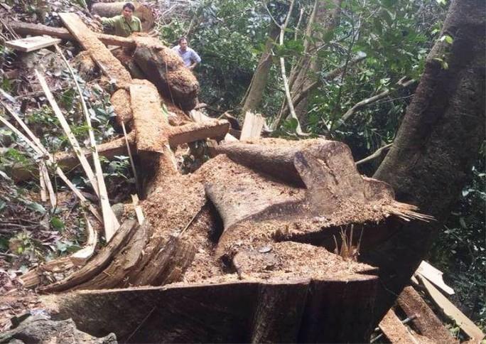 Cận cảnh phá rừng trong vùng lõi Khu bảo tồn thiên nhiên Ngọc Sơn - Ngổ Luông - Ảnh 1.