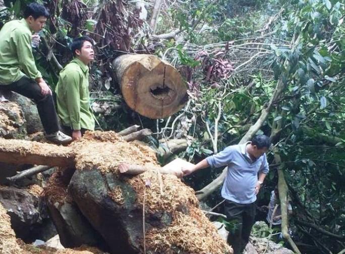 Cận cảnh phá rừng trong vùng lõi Khu bảo tồn thiên nhiên Ngọc Sơn - Ngổ Luông - Ảnh 8.