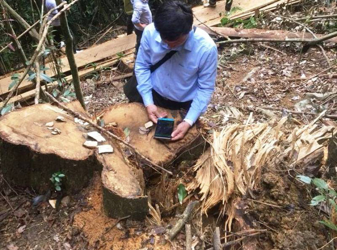 Cận cảnh phá rừng trong vùng lõi Khu bảo tồn thiên nhiên Ngọc Sơn - Ngổ Luông - Ảnh 4.