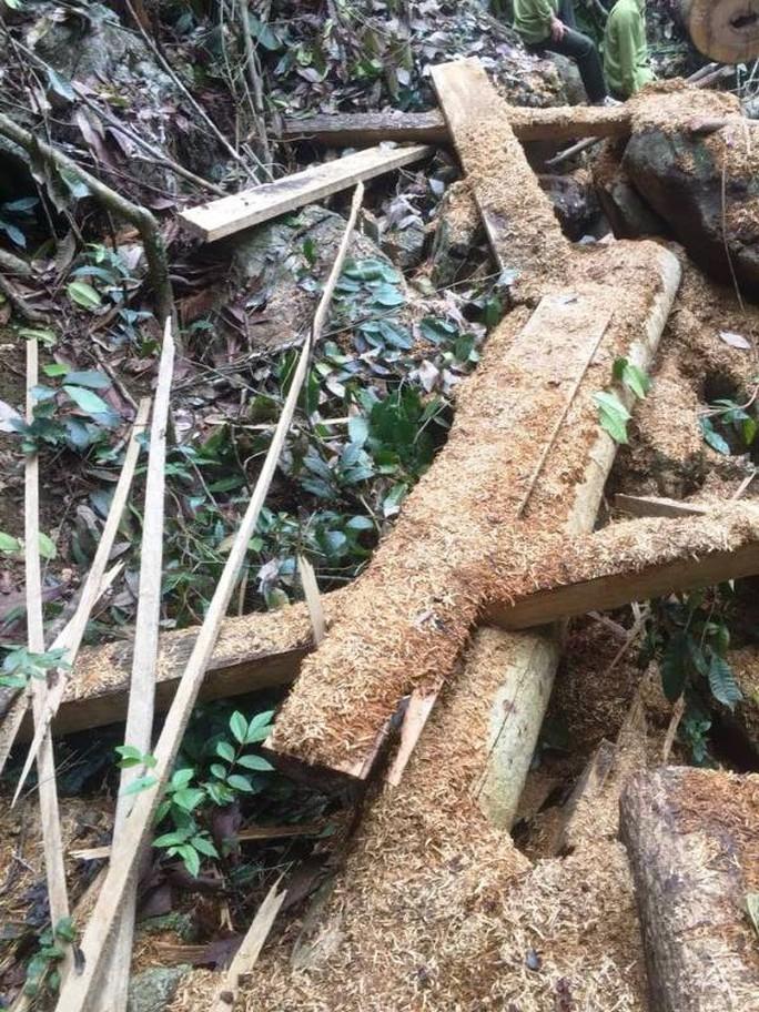 Cận cảnh phá rừng trong vùng lõi Khu bảo tồn thiên nhiên Ngọc Sơn - Ngổ Luông - Ảnh 6.
