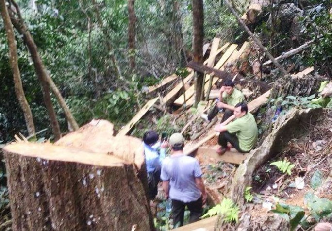 Cận cảnh phá rừng trong vùng lõi Khu bảo tồn thiên nhiên Ngọc Sơn - Ngổ Luông - Ảnh 11.