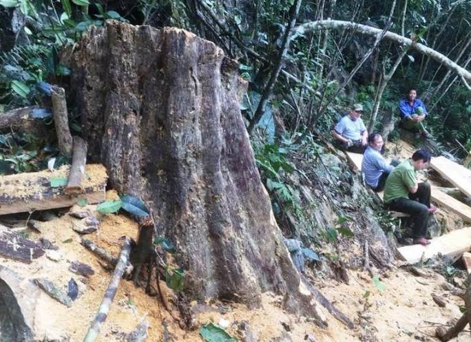 Cận cảnh phá rừng trong vùng lõi Khu bảo tồn thiên nhiên Ngọc Sơn - Ngổ Luông - Ảnh 2.