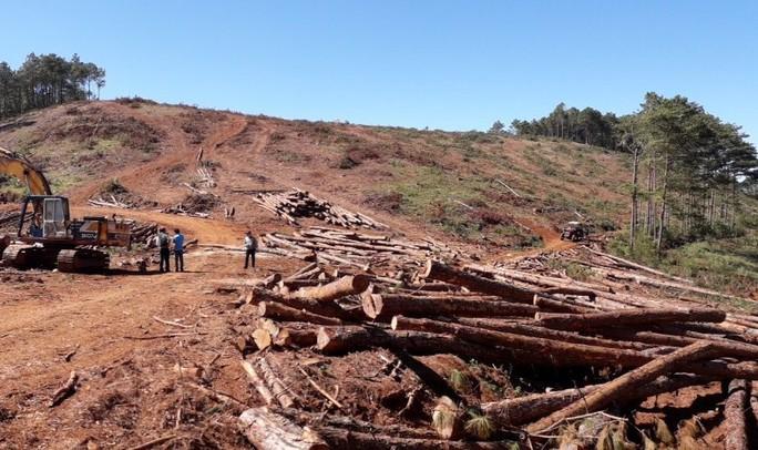 Chủ tịch xã nhận 350 triệu đồng để lâm tặc hạ rừng - Ảnh 1.