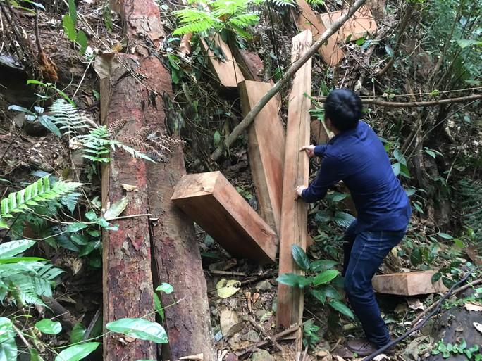 Cận cảnh khu rừng gỗ quý ở Quảng Bình bị lâm tặc chặt phá tan hoang - Ảnh 3.