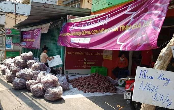 TP HCM lập chiến dịch giải cứu khoai lang giúp nông dân Gia Lai - Ảnh 1.