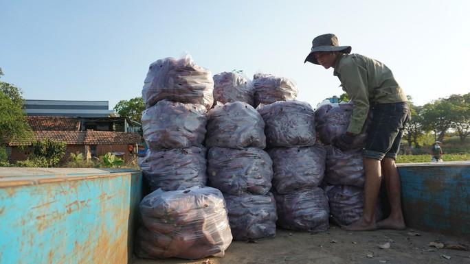 TP HCM lập chiến dịch giải cứu khoai lang giúp nông dân Gia Lai - Ảnh 3.